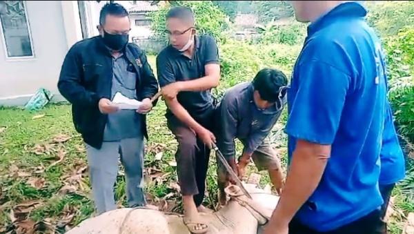 Ditengah Pandemi, PWI Muba Berbagi Daging Qurban